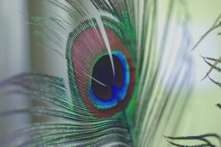 peacock boho style on background