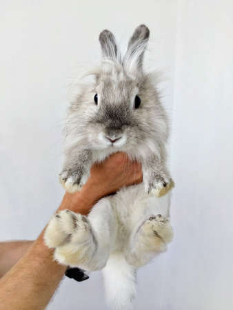 Small white rabbit in the hands. Happy little cute fluffy bunny. Decorative Bunny. Man is holding a cute little rabbit Фото со стока