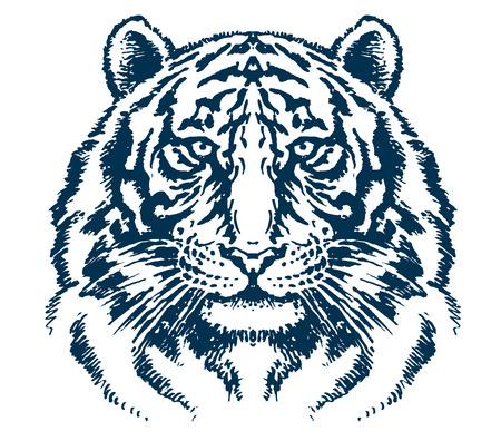 silueta tigre: Tigre detallada cabeza vector