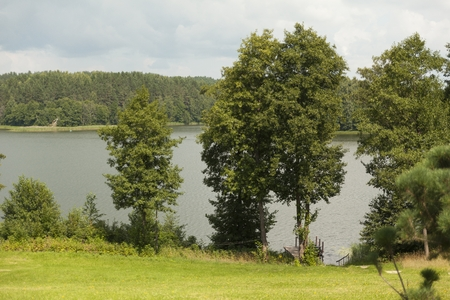 Trees in front of the lake