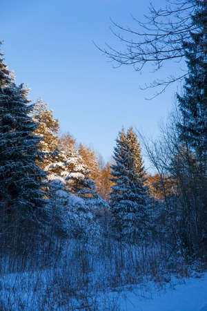 Sunset in the winter  forest Imagens