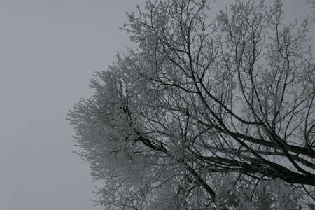 Closeup of white frosty snow covered deciduous tree branch on the background of bright sky. Greetings card Stock Photo