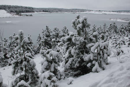 Small snow covered coniferous trees and bushes in the background of frozen quarry and winter landscape in the horizon in Lithuania