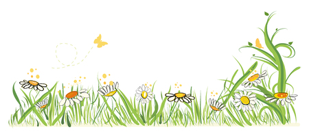 Colorful vector illustration daisy field in spring time