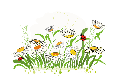 chamomile flower: Colorful vector illustration daisy field in spring time