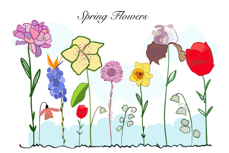Spring time colorful doodle flowers. Iris, Narcissi and tulip flower background