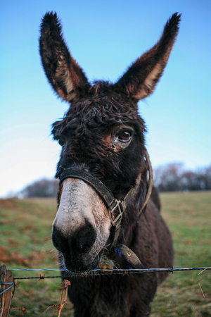 Head of funny donkey at blue sky close up