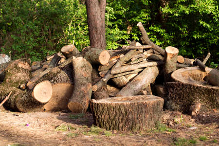 firewood, cut and stacked in the woods