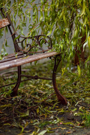 Bench under the weeping willow in the park