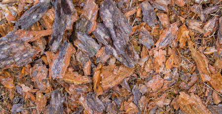background of bark from a pine tree that is scattered on the ground