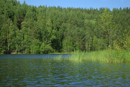 View on the forest lake in Leningrad region, Russia photo