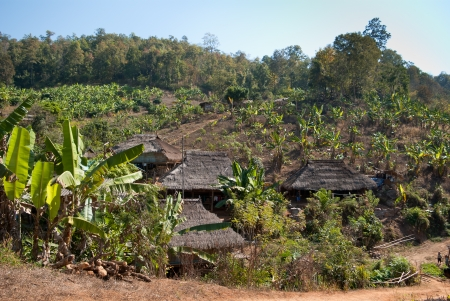 Banana plantation in the village on the north of Thailand
