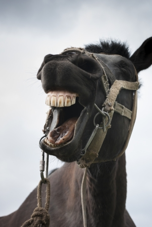 Close up view of horse with opened mouth