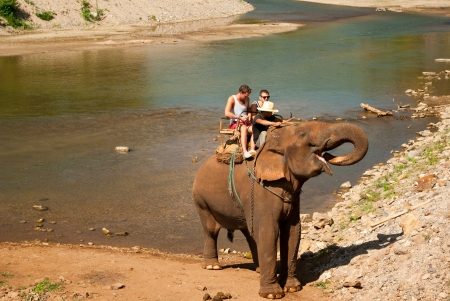 Elephant trekking in an elephant camp in northern Thailand