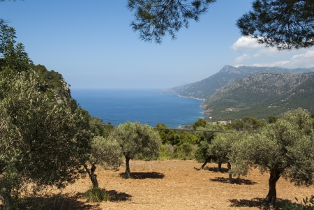 The coast of Mediterranean sea, Mallorca, Spain photo