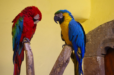 casa colon: Parrots in Columbus House (Casa de Colon) in Las Palmas de Gran Canaria, the capital city of Canary Islands, Spain Stock Photo