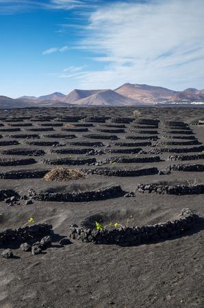Typical vineyard in La Geria, Lanzarote, Canary Islands, Spain Stock Photo