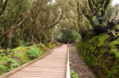 laurel mountain: Laurel forest in Anaga National Park, Tenerife, Canary islands, Spain
