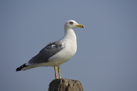 wooden post: Seagull standing on a wooden post in Venice, Italy