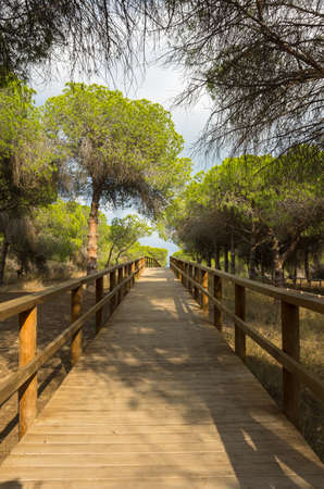 mediterranean forest: Pine forest at La Marina on the coast of Mediterranean sea, Costa Blanca, Spain Stock Photo