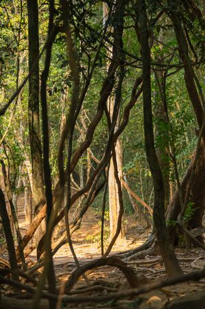 southeastern: Rainforest at sunny day in Cambodia, south-eastern Asia