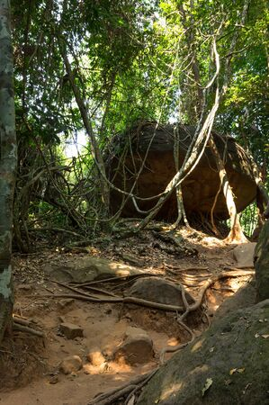 southeastern: Rain forest at sunny day in Cambodia, south-eastern Asia