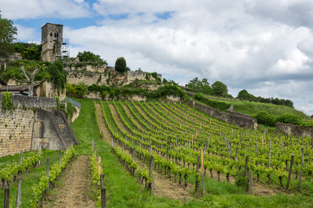 Vineyards of Saint-Emilion, one of the main red wine production areas of Bordeaux region, France 免版税图像