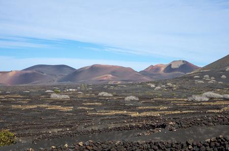 Typical vineyards in La Geria, Lanzarote, Canary Islands, Spain