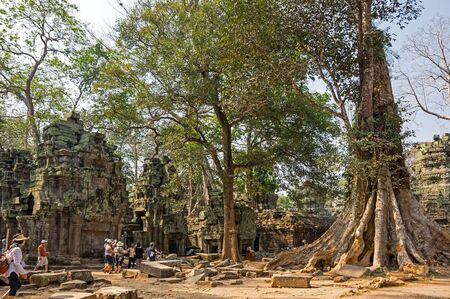 strangler: ANGKOR WAT, CAMBODIA - JANUARY 29, 2015: Unidentified tourists at Ta Prohm temple in Angkor Wat. Angkor Wat is the largest Hindu temple complex and religious monument in the world