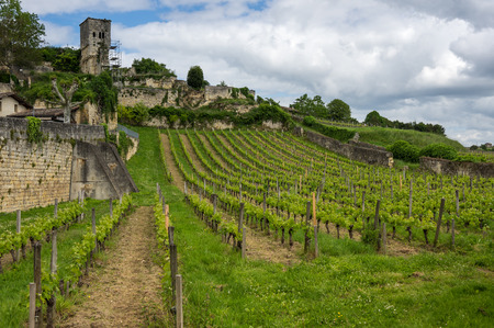 Vineyards of Saint-Emilion, one of the main red wine production areas of Bordeaux region, France Stock Photo