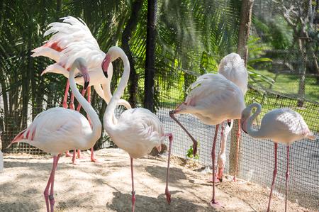 View of flamingos at zoo in Pattaya, Thailand