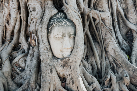 A stone head of Buddha surrounded by tree's roots in Wat Prha Mahathat Temple in Ayutthaya, Thailand