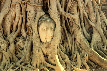 A stone head of Buddha surrounded by trees roots in Wat Prha Mahathat Temple in Ayutthaya, Thailand