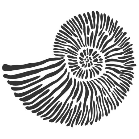 Ammonite vector data in black and white