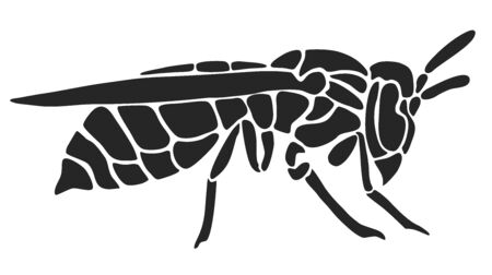 Wasp as customizeable vector data in black and white