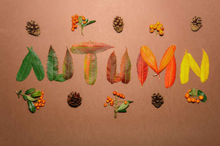 Autumn leaves in every color of autumn Stock Photo