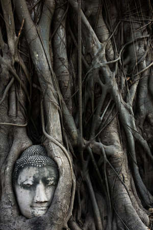 the sandstone head is entrapped in the roots and lies beneath a Bodhi tree in the vicinity of Wat Mahathat in Ayutthaya  photo