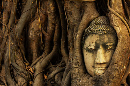 Buddha head entwined within the roots of a tree in Wat Mahathat, Ayutthaya