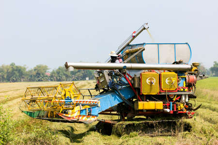 combine harvester in the rice field