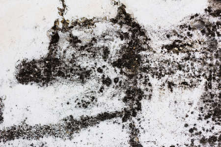 drop ceiling: Concrete wall with moldy