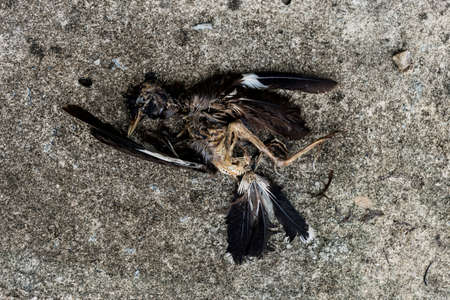 scourge: Dead bird on floor