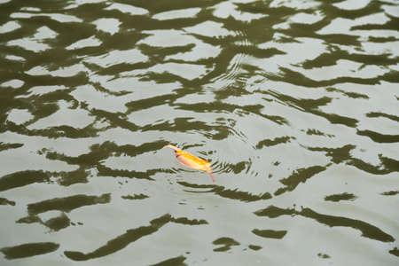 orange leaf floating on the water surface wave.