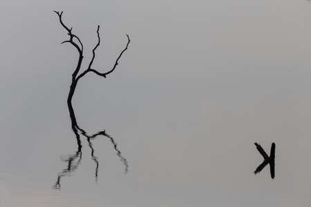 Reflection of a leafless tree in the water, abstract photo