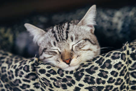 cat sleeping in the cat bed