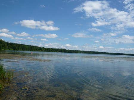 minnesota woods: Mississippi headwaters  Lake Itasca , Bemidji, Minnesota USA