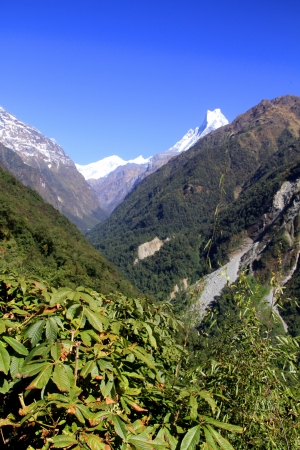 Annapurna valley with Machapuchare and rhododendro