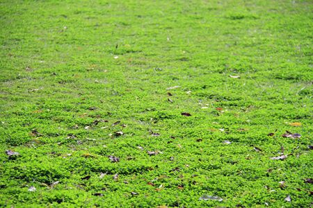 Background of bright green grass in sunny day, shallow dept of field Stock Photo