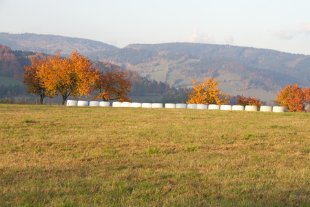 Agricultural landscape with field in the foreground and yellow trees and hills in background