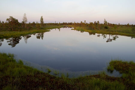 Landscape with small lake and pines in swamp of Kemeri in Latvia
