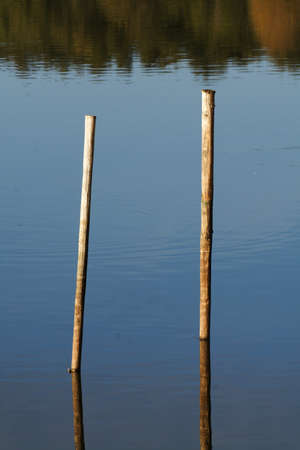 wooden beanpoles staying in a muddy pond Stock Photo - 16049704